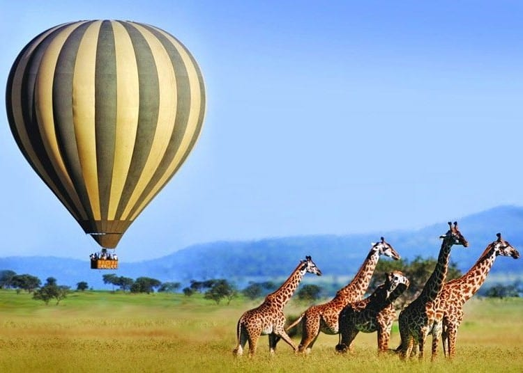 Safaris & Expeditions