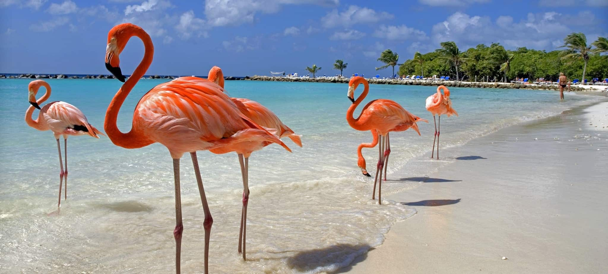 Flamingo Beach, Aruba