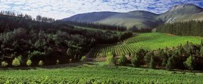 Paul Cluver Wine Estate