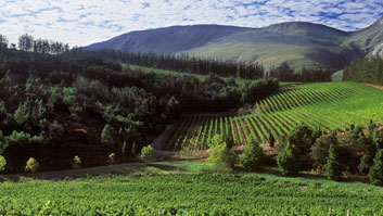 Paul Cluver Wine Estate