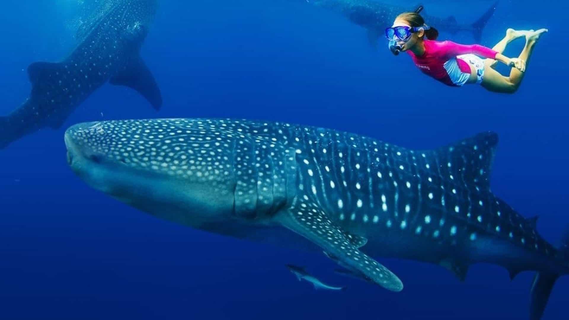 Snorkeling with whale sharks in Zanzibar, Tanzania