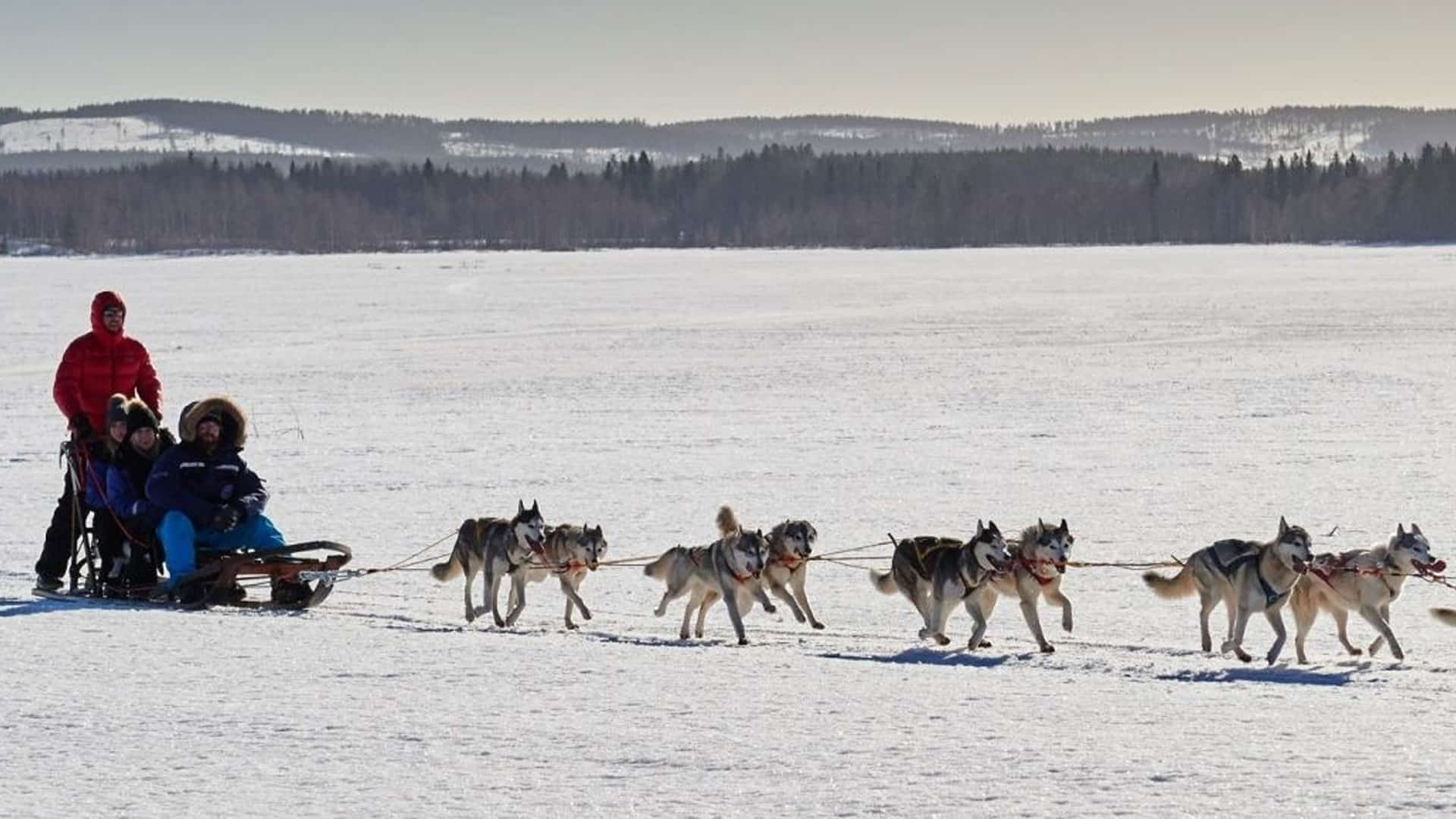 Snow safari in Lapland
