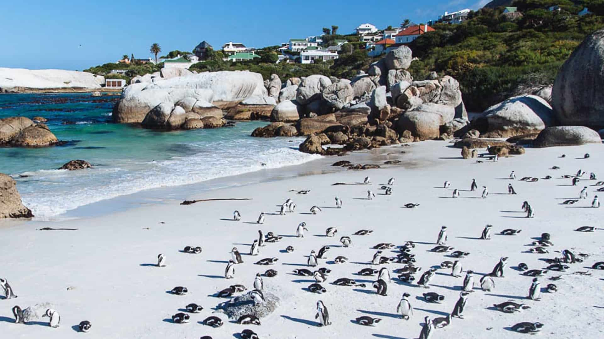 Swim with Penguins at Boulders Beach, Cape Town