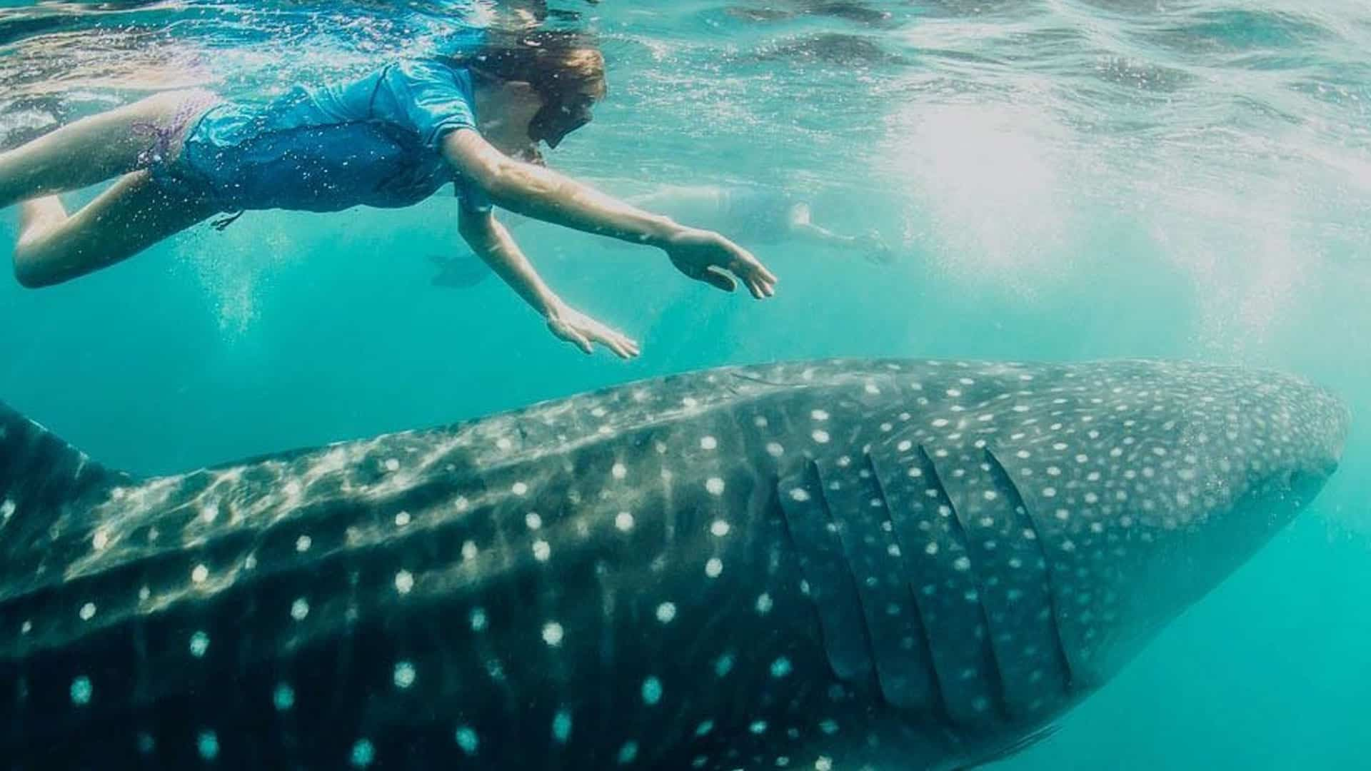 swimming with whalesharks in Zanzibar