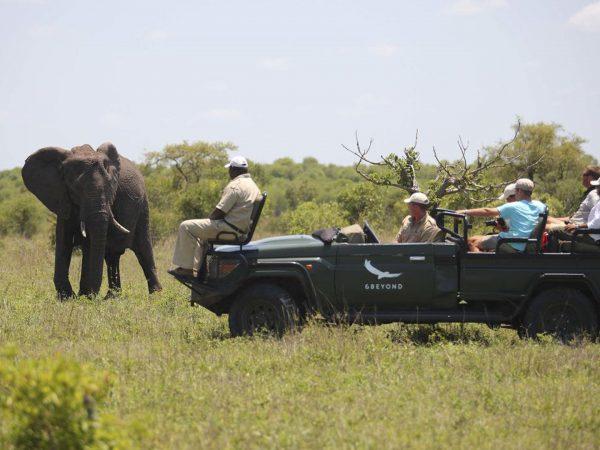 AndBeyond Ngala Safari Lodge Ngala Safari game drive
