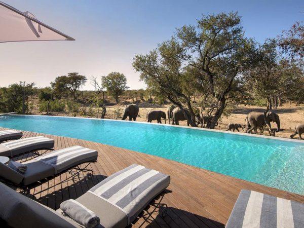 AndBeyond Ngala Safari Lodge pool