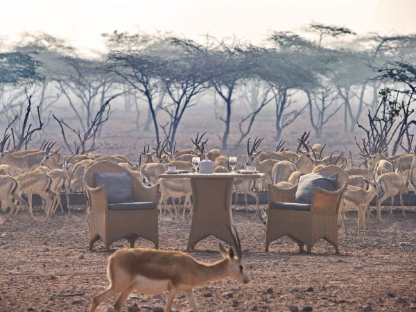 DIRS Dining Breakfast With Gazelles