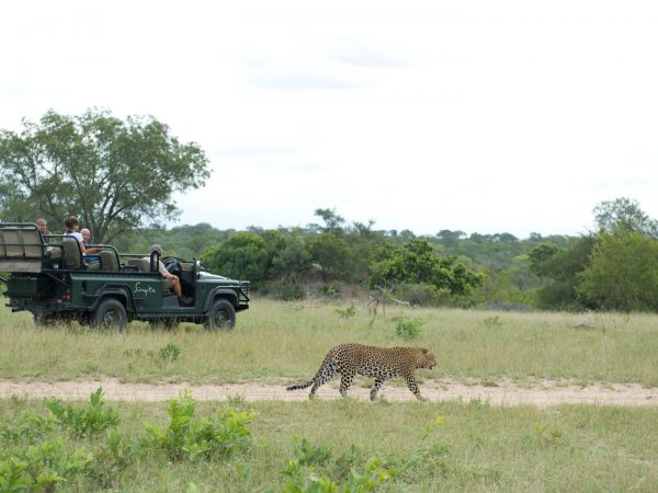 Singita-Boulders-Lodge-Game-Drive5