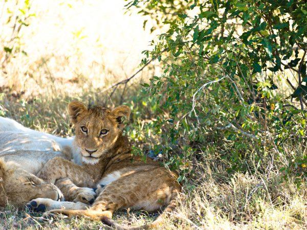 Singita Ebony Lodge Wildlife