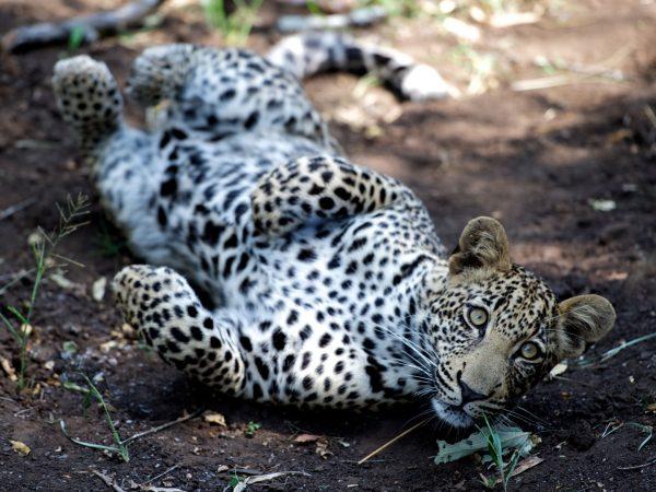 Singita-Lebombo-Wildlife