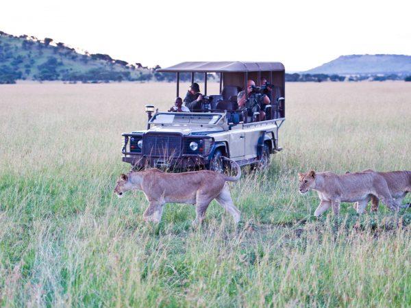 Singita Mara River Game Drives