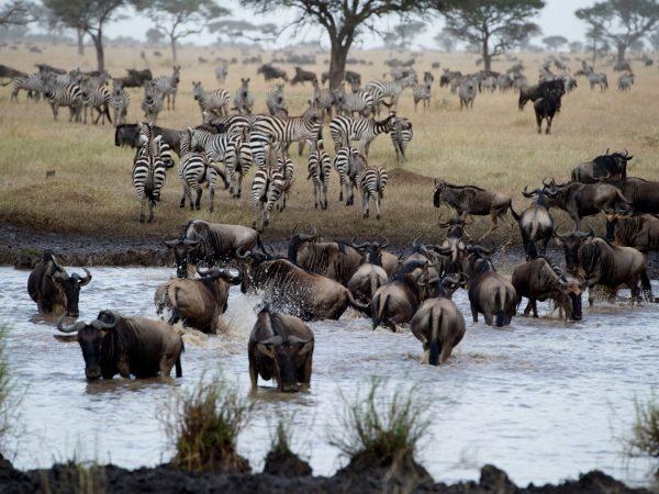 Singita Mara River Wildlife