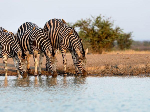 Singita-Pamushana-Lodge-wildlife