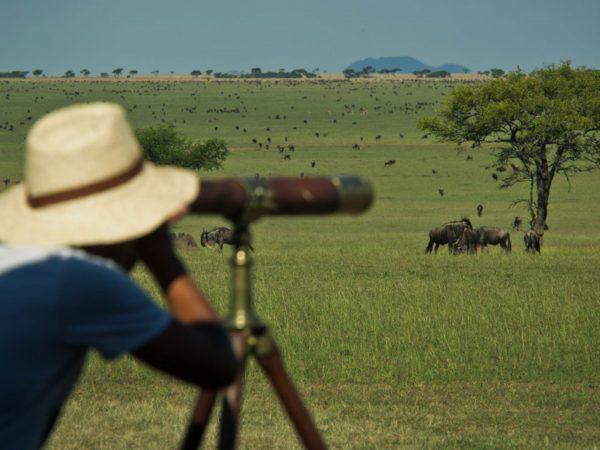 Singita Sabora wildlife viewing