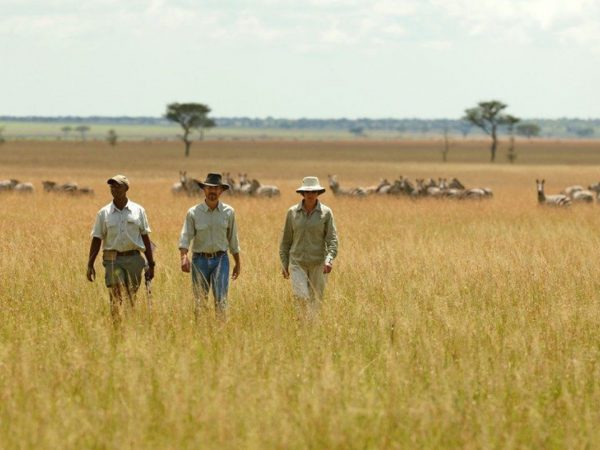 Singita-Faru-Faru-walking