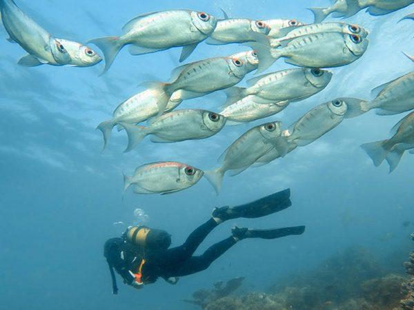 AndBeyond Benguerra Island scuba diving