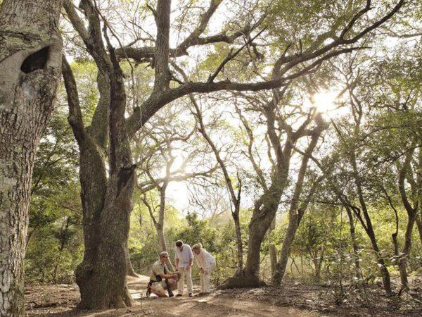 AndBeyond-Phinda-Rock-Lodge-Guided-Bush-Walks