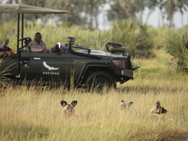 AndBeyond Sandibe Okavango Safari Lodge Game Safari
