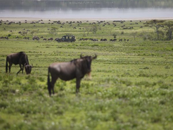 AndBeyond Serengeti Under Canvas ride