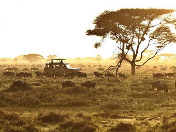 AndBeyond Serengeti Under Canvas safari ride