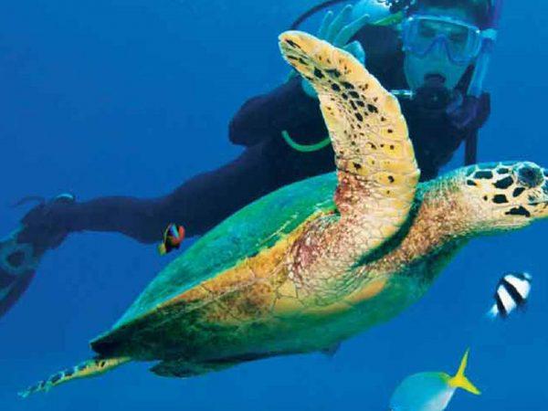 AndBeyond Vamizi Island scuba diving