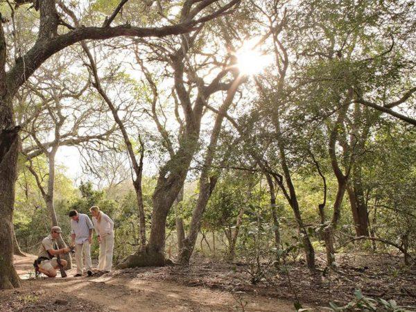 AndBeyond Phinda Mountain Lodge luxury walking safari