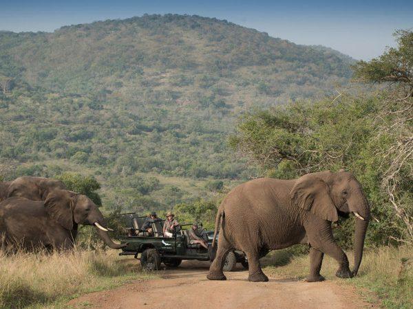 AndBeyond Phinda Mountain Lodge elephants