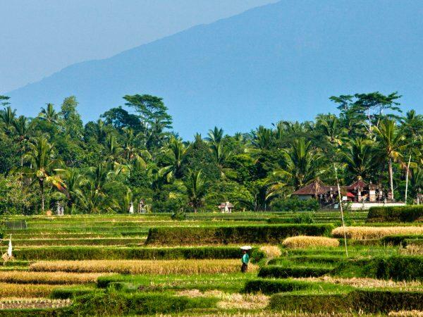 COMO Uma Ubud Rice Field Walk