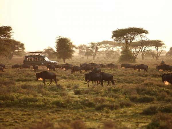 Game-drive-vehicle-between-the-great-wildebeest-migration
