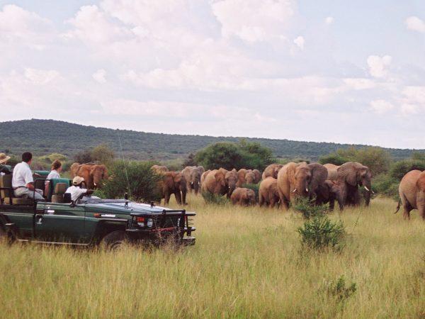 Sanctuary Makanyane Safari Lodge vehicle safari