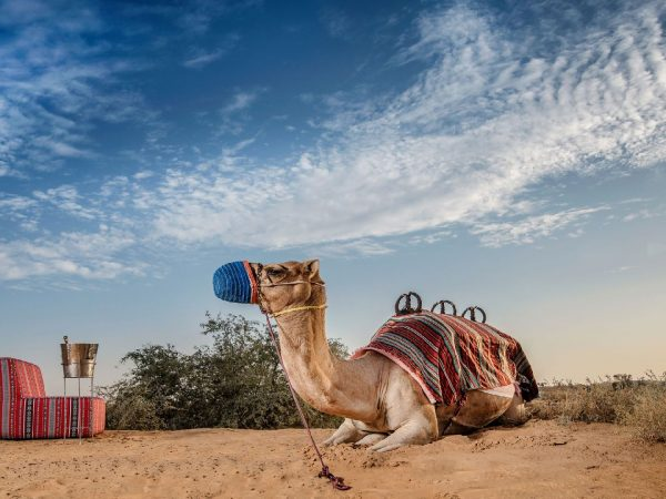 The Ritz Carlton AL Wadi Desert Camel Ride