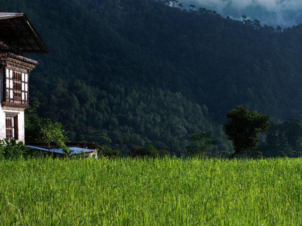COMO Uma Punakha Punakha Valley Hiking