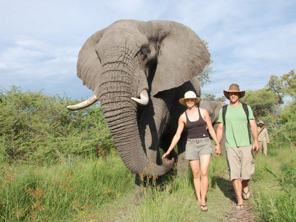 sanctuary baines camp walk with elephant