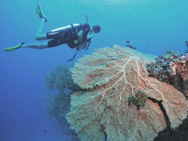 Amilla Fushi Maldives Diving