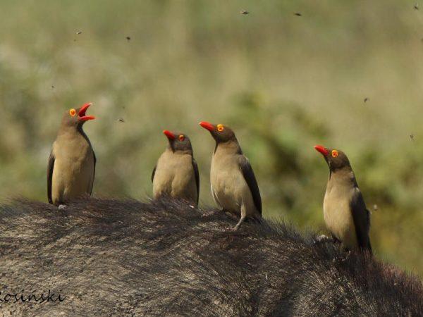 Londolozi Pioneer Camp Pioneer Birding