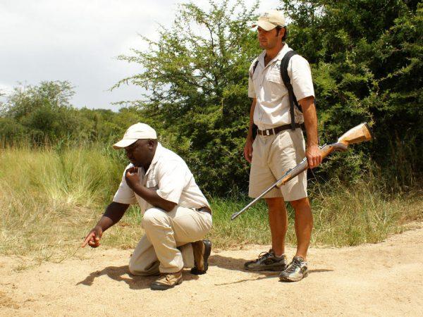 Londolozi Pioneer Camp Pioneer Tracking