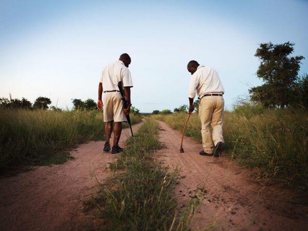 Londolozi Tree Camp Tracking