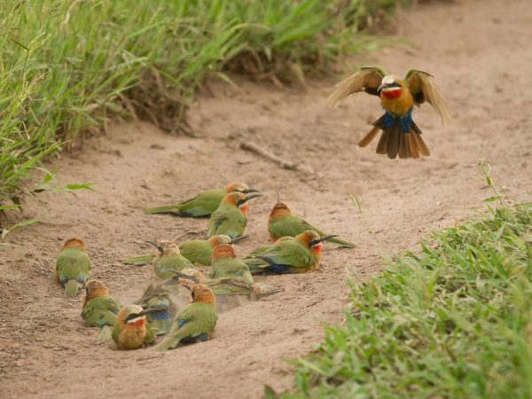 Londolozi Varty Camp Birding