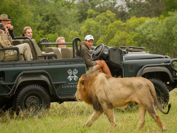 Londolozi Varty Camp Game Drives