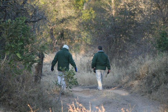 Londolozi Varty Camp Track