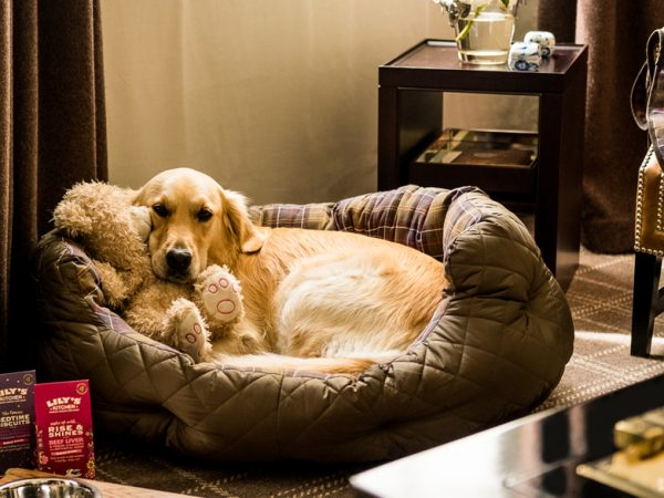 Rosewood London Pampered Pets
