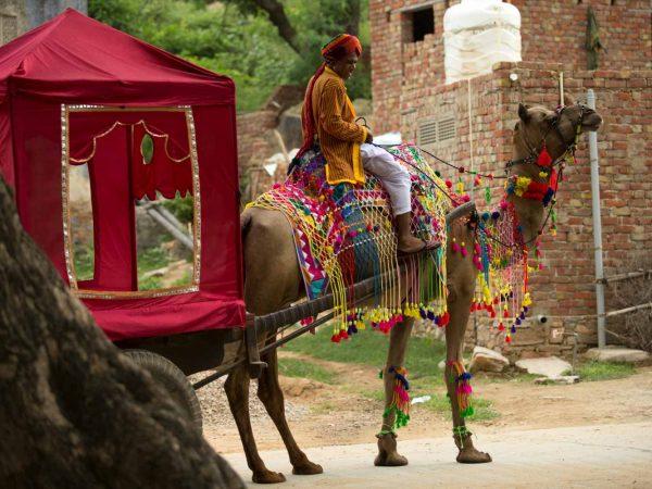 Alila Fort Bishangarh Camel