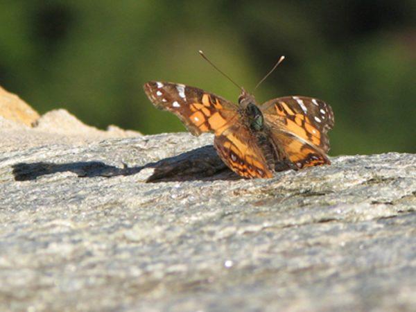 Alila Jabal Akhdar Butterfly Trail