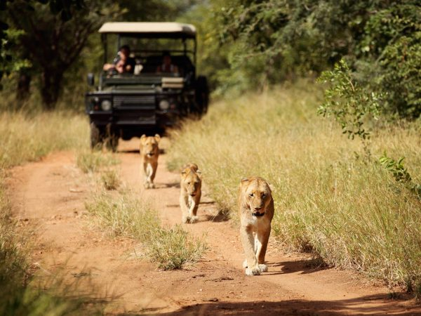 Camp Jabulani Game drives