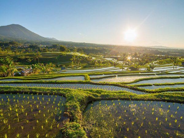 Four Seasons Resort Bali at Sayan Ubud rice terraces