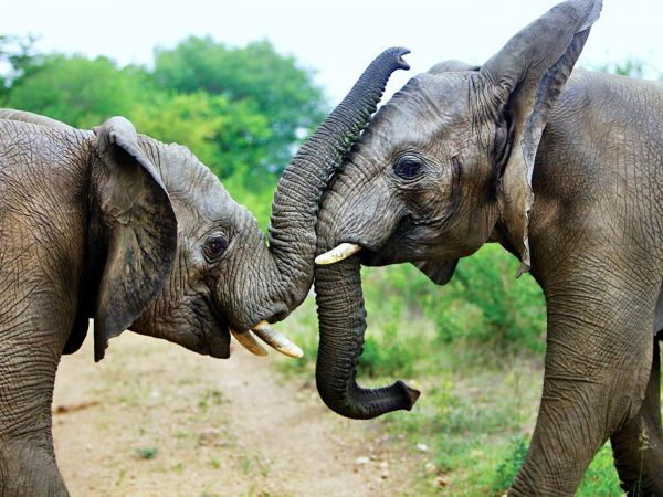 Kapama Karula Lodge Elephant interaction