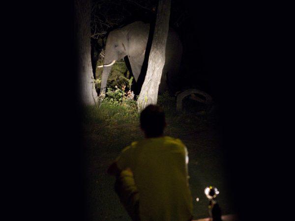 Ker And downey Botswana Shinde Night drives