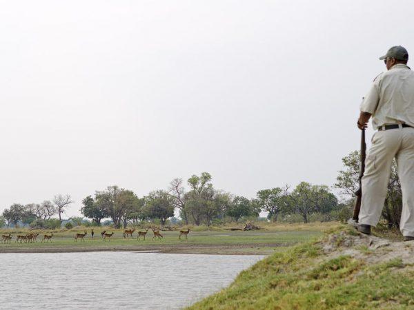 Ker And downey Botswana Shinde Walking Safari