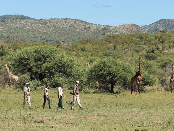Madikwe Safari Lodge Guided bush walk