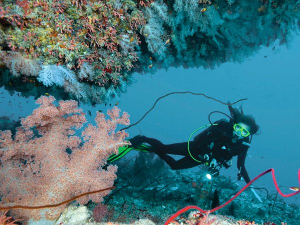 Maldives at Landaa Giraavaru scuba diving